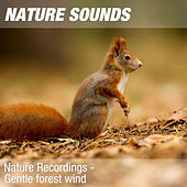 Nature Recordings - Gentle forest wind by Nature Sounds (1)