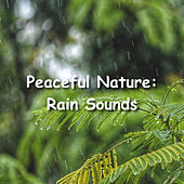 Peaceful Nature: Rain Sounds by Rain Sounds