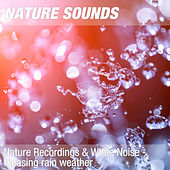Nature Recordings & White Noise - Pleasing rain weather by Nature Sounds (1)