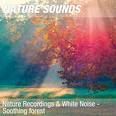 Nature Recordings & White Noise - Soothing forest by Nature Sounds (1)