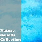 Nature Sounds Collective by Nature Sounds (1)