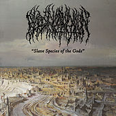 Slave Species of the Gods by Blood Incantation