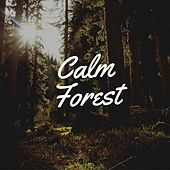 Calm Forest by Jox Talay