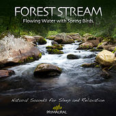 Forest Stream - Flowing Water With Spring Birds de Tim Nielsen