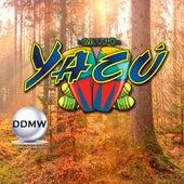 Viento Que Va by Grupo Yacú