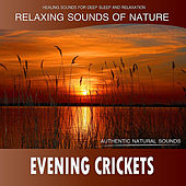 Evening Crickets: Relaxing Sounds of Nature de Healing Sounds for Deep Sleep and Relaxation