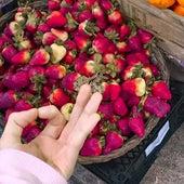 Strawberry Fields Forever (Cover) de Hadita Cuantica