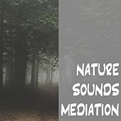 Nature Sounds Meditation by Nature Sounds (1)
