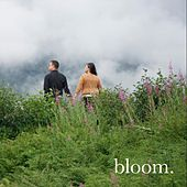Shallow by Bloom