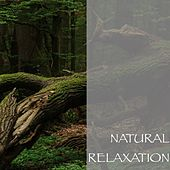 Natural Relaxation by Nature Sounds (1)