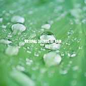 Natural Sounds of Rain by Nature Sounds (1)
