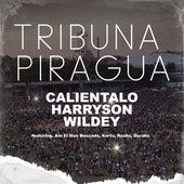Tribuna Piragua de Harryson & Wildey Calientalo