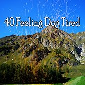 40 Feeling Dog Tired von Water Sound Natural White Noise