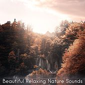 Beautiful Relaxing Nature Sounds by Nature Sounds (1)