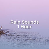 Rain Sounds 1 Hour by Rain Sounds