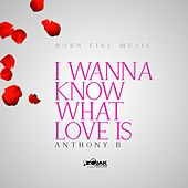 I Wanna Know What Love Is by Anthony B