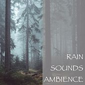 Rain Sounds Ambience by Various Artists