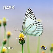 Insecta by Dask