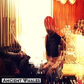 Feeling by Ancient Whales