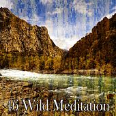46 Wild Meditation by Yoga Workout Music (1)