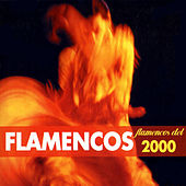 Flamencos del 2000 di German Garcia