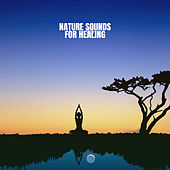 Nature Sounds for Healing de Nature Sounds (1)