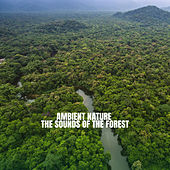 Ambient Nature: The Sounds of the Forest von Rain Sounds