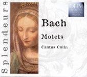 Bach: Motets de Cantus Cölln