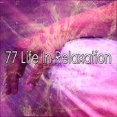 77 Life in Relaxation de Meditación Música Ambiente
