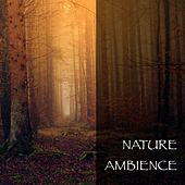 Nature Ambience de Various Artists