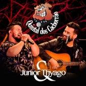 Quintal dos Cachorrão de Junior e Thyago