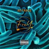 Antrace von Frey