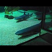 Crank Dat Shark Attack - Single by Speedy