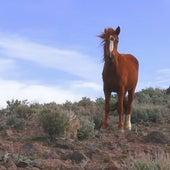 High Horse (Kacey Musgraves Remix) by Thumpasaurus