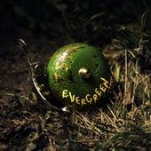 Evergreen von Scott Helman