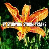 37 Studying Storm Tracks by Rain Sounds and White Noise