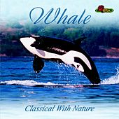Whales by Various Artists
