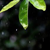 Rainy Sounds for Calmly Sleep by Rain for Deep Sleep (1)