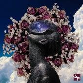 Perfumes del Alba de Carol Antonia