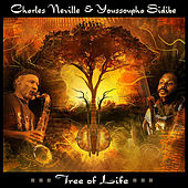 Tree of Life de Youssoupha