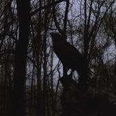 Black Raven 04 de Modular Phaze
