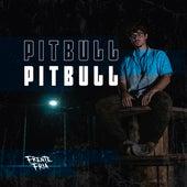 Pitbull de Frente Fria