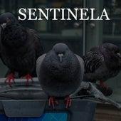 Sentinela by D-Smoke