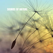 Sounds of Nature by White Noise Research (1)