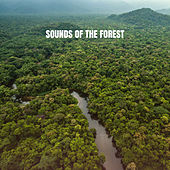 Sounds of the Forest de White Noise Babies