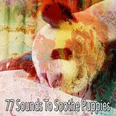 77 Sounds to Soothe Puppies von Rockabye Lullaby