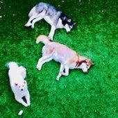 Husky by Riff Raff