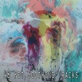 48 Pet Soothing Tracks de Meditación Música Ambiente