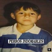 Perros Indomables von Julio
