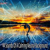 44 Sounds of a Calming Neutral Background von Massage Therapy Music